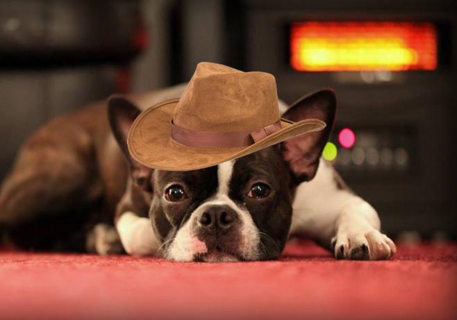 cowboystan.jpg